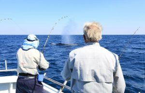 Whales this Spring have been outstanding!