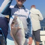 Snapper Fish caught by a Boy in Autumn 2019